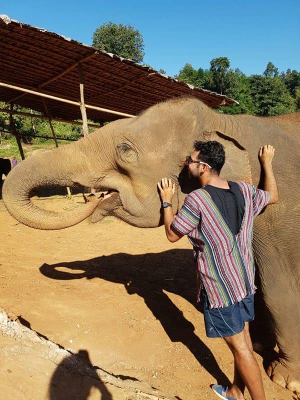 Elefantes na Tailândia - porque não montar